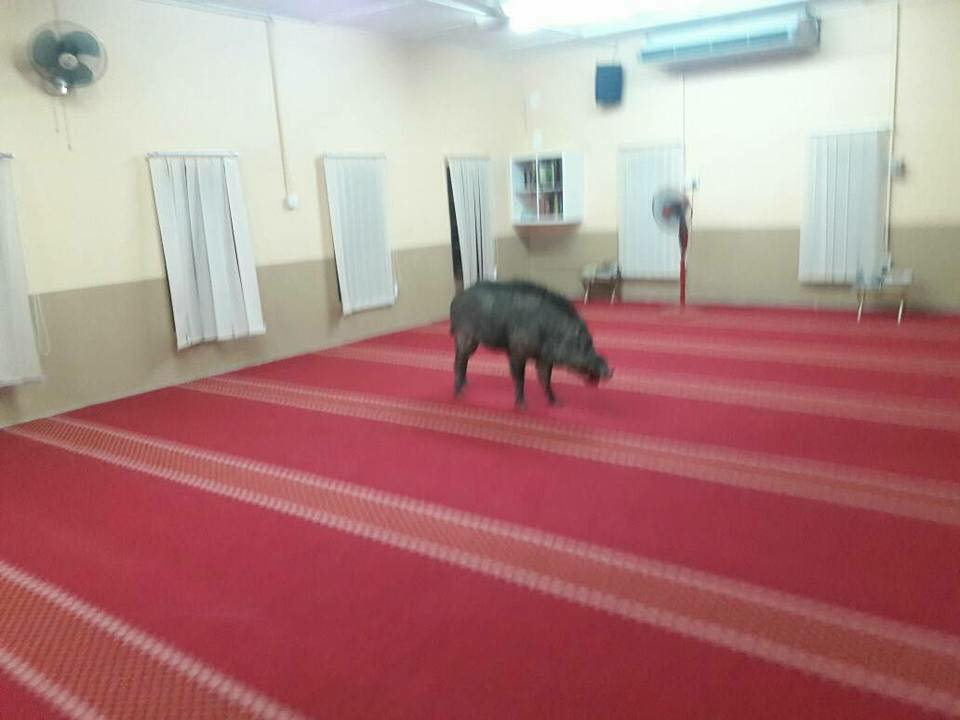 Man injured by wild boar that wandered into mosque in Malaysia